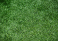 Why Everyone Should Install The Artificial Grass In Their Gardens?