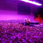 What Are The Tips For Successful Plant Growth For LED Grow Lights?