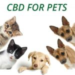 Cbd For Pets: How Does Cbd Affect Dogs, And What Are The Side Effects?