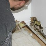 The Reason Behind The Presence Of Mold In Homes